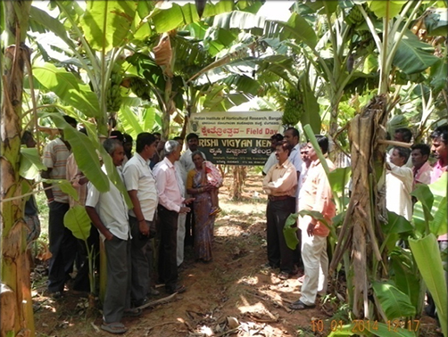 Banana Field Day-10.1.2014