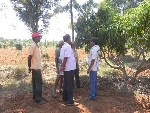 Mango Plot  visit at Neeralapura Tumkur